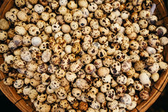 Quail eggs top view Stock Images