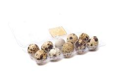 Quail eggs in transparent plastic container Stock Images