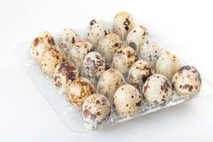 Quail eggs in a transparent plastic container Stock Photo