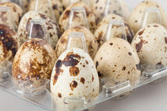 Quail eggs in a transparent plastic container on white Stock Image
