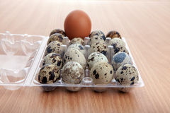 Quail eggs in transparent plastic container on wooden table Royalty Free Stock Photo