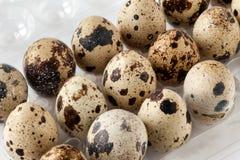 Quail Eggs On Tray Royalty Free Stock Photos