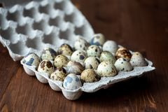 Quail eggs in the tray royalty free stock photos