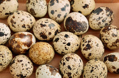 Quail eggs in tray horizontal. On the full backgrpound close-up Stock Photography
