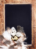 Quail eggs on vintage blackboard close up. Easter Symbol with c Royalty Free Stock Photos