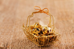 Quail eggs in metal basket Stock Photography