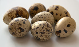 Quail eggs. On a white background Stock Photography