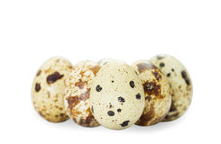 Quail eggs Stock Photography