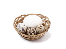 Quail eggs. On white background Stock Photos