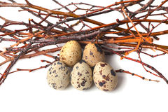 Quail eggs are  on a white background Stock Photo
