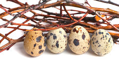 Quail eggs are  on a white background Stock Photos