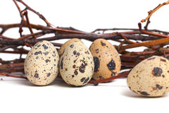 Quail eggs are  on a white background. Royalty Free Stock Photo