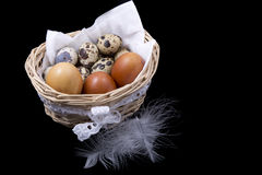 Quail eggs and white feathers in the basket Stock Photography