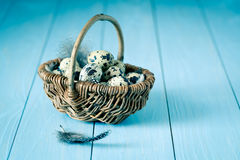 Quail eggs in a wicker basket Stock Photo