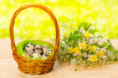 Quail eggs in the wicker basket for Easter Royalty Free Stock Photography