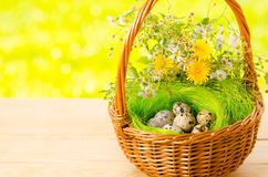 Quail eggs in the wicker basket for Easter Royalty Free Stock Images