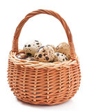 Quail eggs in a wicker basket Royalty Free Stock Photography