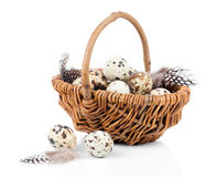 Quail eggs in a wicker basket Stock Photography