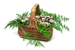 Quail eggs in a wicker basket on a white background. Horizontal photo Stock Image