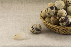 Quail eggs in a wicker oval shape Royalty Free Stock Photography