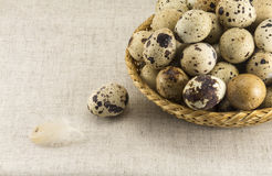 Quail eggs in a wicker oval shape Royalty Free Stock Photos