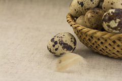Quail eggs in a wicker oval shape Stock Photo