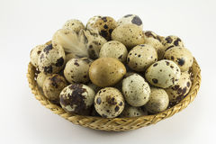 Quail eggs in a wicker oval shape Stock Photos