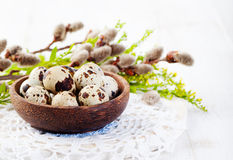 Quail eggs in a wooden bowl Easter white background Willow Copy space Royalty Free Stock Photo