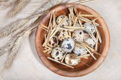 Quail eggs in a wooden bowl and wheat ears on linen Royalty Free Stock Photo