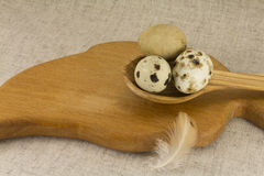 Quail eggs in a wooden spoon Royalty Free Stock Photo