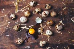 Quail eggs on wooden table. Quail eggs on a brown wooden table Stock Photos