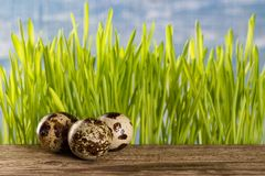 Quail eggs on wooden table with a green grass stock photos