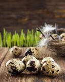 Quail eggs on a wooden table royalty free stock photography