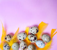 Quail eggs with yellow feathers on pink background. Concept of Easter holiday Royalty Free Stock Photography