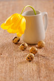 Quail eggs and flower Stock Photography