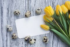 Quail eggs, yellow tulips and white card on wooden background stock photo
