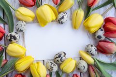 Quail eggs, yellow tulips and white card on wooden background stock image