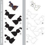 Quail. Find true correct shadow. Quail with different shadows to find the correct one. Compare and connect object with it true shadow. Easy educational kid Stock Images