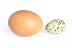 Quail and hen eggs Stock Image
