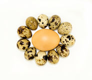 Quail and hen's egg Royalty Free Stock Photography