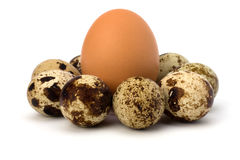 Quail and hen's eggs Stock Images