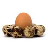 Quail and hen's eggs Royalty Free Stock Photography