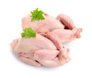 Quail meat. Isolated on white background. Royalty Free Stock Photos