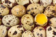Quail eggs. Quail mottled eggs close up Royalty Free Stock Images