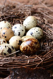 Quail Nest Closeup Stock Photo