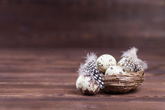 Quail nest. Quail eggs in nest for easter decoration Royalty Free Stock Photography
