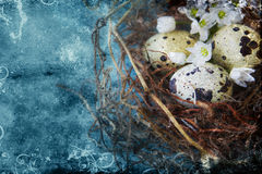 Quail nest with spotted aggs Royalty Free Stock Photos