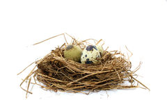 Quail nest with spotted eggs Royalty Free Stock Images