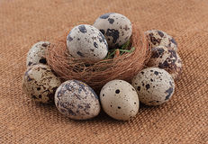Quail organic eggs. With straw in nest on rustic wooden background Royalty Free Stock Images