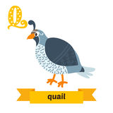 Quail. Q letter. Cute children animal alphabet in vector. Funny Royalty Free Stock Photography